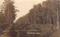 Лиговский парк